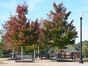 Swift Cantrell dog park